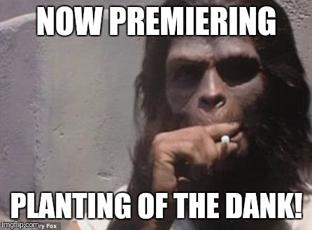 Planting of the dank | NOW PREMIERING PLANTING OF THE DANK! | image tagged in planet of the apes,weed,pot,dank,smoking,stoned | made w/ Imgflip meme maker