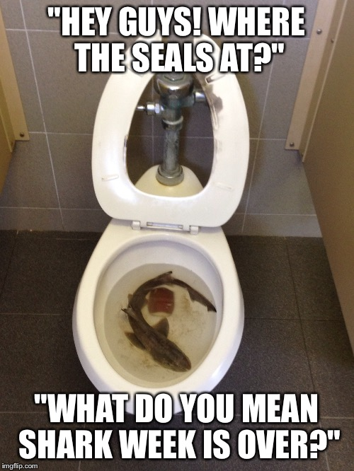 "Eugh | ""HEY GUYS! WHERE THE SEALS AT?"" ""WHAT DO YOU MEAN SHARK WEEK IS OVER?"" 