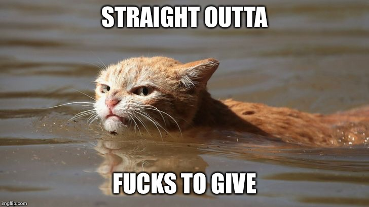 Pissed off cat | STRAIGHT OUTTA F**KS TO GIVE | image tagged in cat,grumpy,grumpy cat,pissed off,flood,hurricane harvey | made w/ Imgflip meme maker