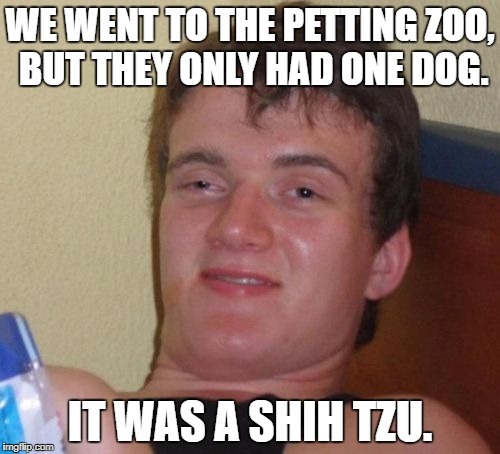 10 Guy Meme | WE WENT TO THE PETTING ZOO, BUT THEY ONLY HAD ONE DOG. IT WAS A SHIH TZU. | image tagged in memes,10 guy | made w/ Imgflip meme maker
