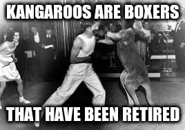KANGAROOS ARE BOXERS THAT HAVE BEEN RETIRED | made w/ Imgflip meme maker