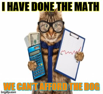 cat | I HAVE DONE THE MATH WE CAN'T AFFORD THE DOG | image tagged in cat | made w/ Imgflip meme maker