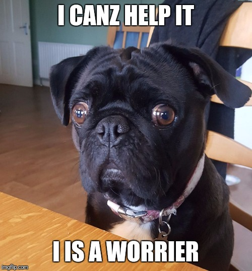 I CANZ HELP IT I IS A WORRIER | image tagged in huhdug | made w/ Imgflip meme maker