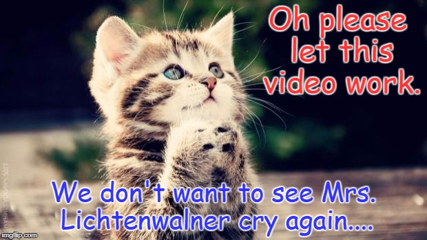 Praying cat | Oh please let this video work. We don't want to see Mrs. Lichtenwalner cry again.... | image tagged in praying cat | made w/ Imgflip meme maker