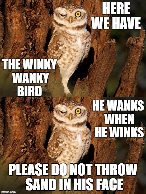HERE WE HAVE PLEASE DO NOT THROW SAND IN HIS FACE THE WINKY WANKY BIRD HE WANKS WHEN HE WINKS | image tagged in crazy eyed bird | made w/ Imgflip meme maker
