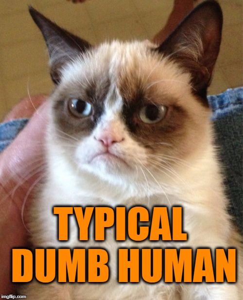 Grumpy Cat Meme | TYPICAL DUMB HUMAN | image tagged in memes,grumpy cat | made w/ Imgflip meme maker