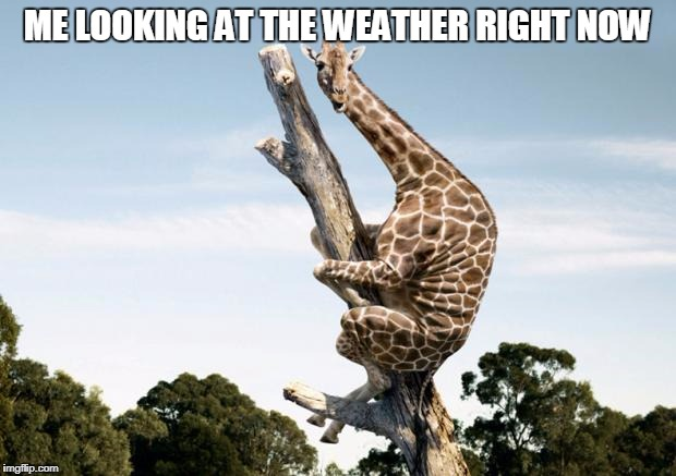 Scared Giraffe | ME LOOKING AT THE WEATHER RIGHT NOW | image tagged in scared giraffe | made w/ Imgflip meme maker