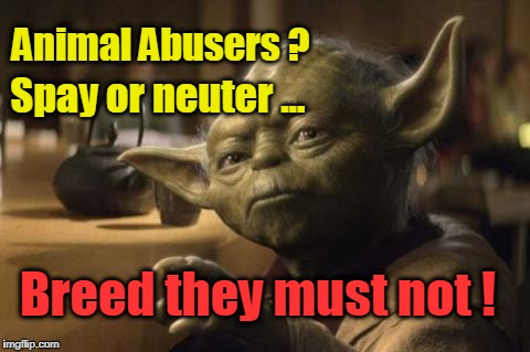 Yoda: spay/neuter animal abusers | Animal Abusers ? Breed they must not ! Spay or neuter ... | image tagged in yoda,animal abusers,spay,neuter | made w/ Imgflip meme maker