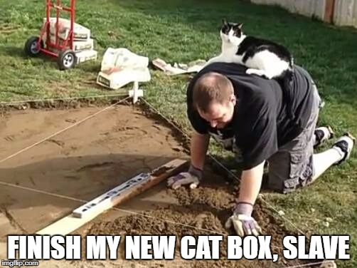 cats rule the world | FINISH MY NEW CAT BOX, SLAVE | image tagged in funny cats | made w/ Imgflip meme maker