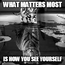 WHAT MATTERS MOST IS HOW YOU SEE YOURSELF | image tagged in cat seeing tiger | made w/ Imgflip meme maker