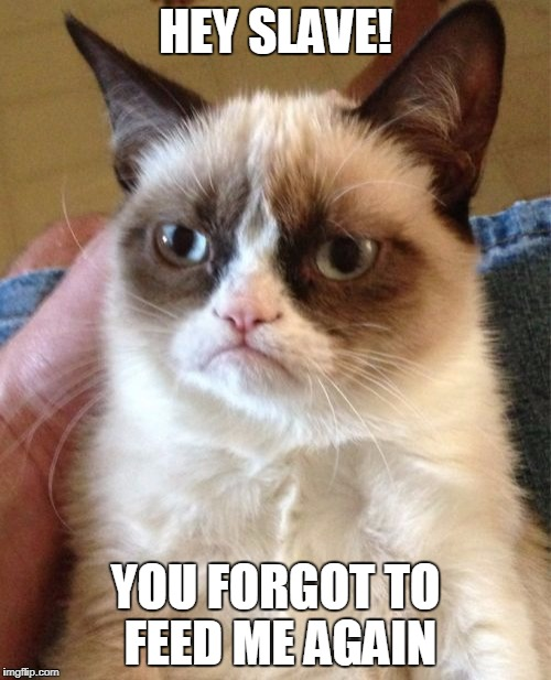 Grumpy Cat |  HEY SLAVE! YOU FORGOT TO FEED ME AGAIN | image tagged in memes,grumpy cat | made w/ Imgflip meme maker