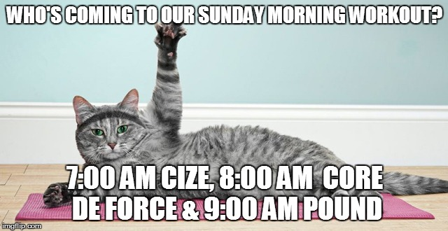 WHO'S COMING TO OUR SUNDAY MORNING WORKOUT? 7:00 AM CIZE, 8:00 AM  CORE DE FORCE & 9:00 AM POUND | image tagged in cat working out | made w/ Imgflip meme maker
