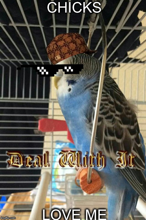 CHICKS LOVE ME | image tagged in when your birbs cooler than you,scumbag | made w/ Imgflip meme maker