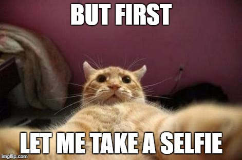 BUT FIRST LET ME TAKE A SELFIE | image tagged in crazy animals | made w/ Imgflip meme maker