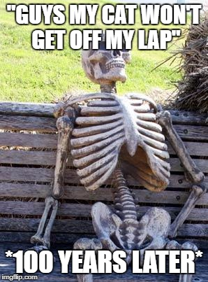 "Waiting Skeleton Meme | ""GUYS MY CAT WON'T GET OFF MY LAP"" *100 YEARS LATER* 