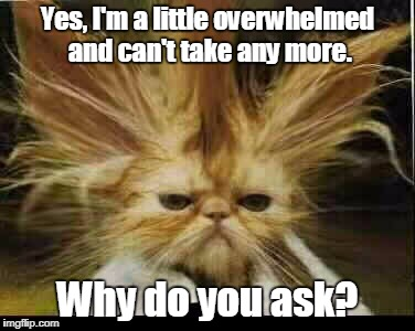Yes, I'm a little overwhelmed and can't take any more. Why do you ask? | image tagged in frustration | made w/ Imgflip meme maker