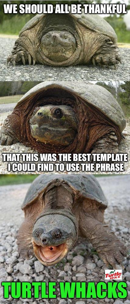 bad pun tortoise