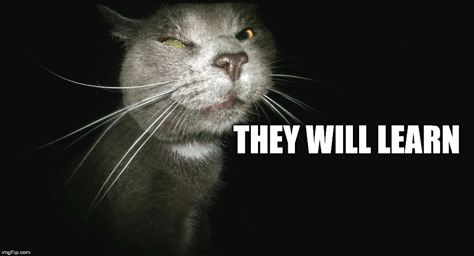 Stalker Cat | THEY WILL LEARN | image tagged in stalker cat | made w/ Imgflip meme maker