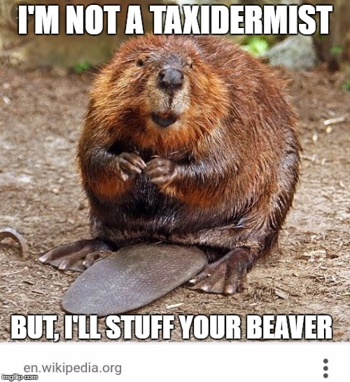 I'M NOT A TAXIDERMIST BUT, I'LL STUFF YOUR BEAVER | image tagged in merkinwig,beaver | made w/ Imgflip meme maker