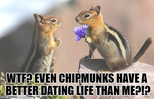 Dating Done Right | WTF? EVEN CHIPMUNKS HAVE A BETTER DATING LIFE THAN ME?!? | image tagged in romancefail,datingdropout,rodentgotmoves,flowersarentforeating,flowers,cute | made w/ Imgflip meme maker