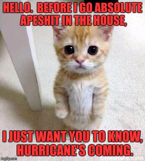 Cute Cat Meme | HELLO.  BEFORE I GO ABSOLUTE APESHIT IN THE HOUSE, I JUST WANT YOU TO KNOW,  HURRICANE'S COMING. | image tagged in memes,cute cat | made w/ Imgflip meme maker