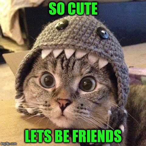 SO CUTE LETS BE FRIENDS | made w/ Imgflip meme maker
