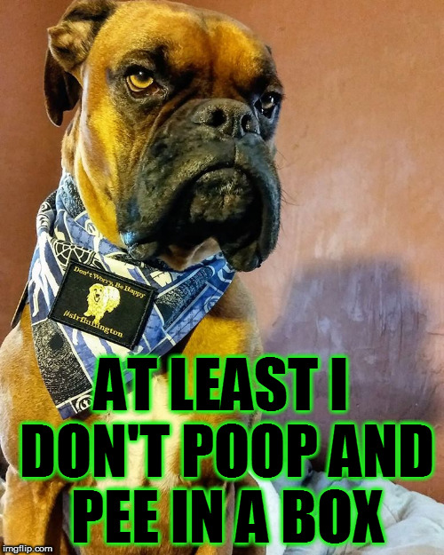 Grumpy Dog | AT LEAST I DON'T POOP AND PEE IN A BOX | image tagged in grumpy dog | made w/ Imgflip meme maker