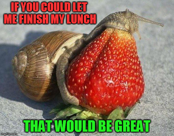 IF YOU COULD LET ME FINISH MY LUNCH THAT WOULD BE GREAT | made w/ Imgflip meme maker