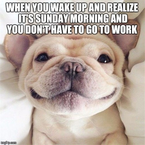 An early Puppy Week submission. Puppy Week - a Lordcakethief Event, June 11th -17th! | WHEN YOU WAKE UP AND REALIZE IT'S SUNDAY MORNING AND YOU DON'T HAVE TO GO TO WORK | image tagged in smiling puppy,puppy,puppy week,jbmemegeek,cute puppies | made w/ Imgflip meme maker