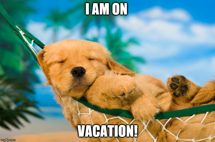 Vacation Dog! | I AM ON VACATION! | image tagged in dog | made w/ Imgflip meme maker