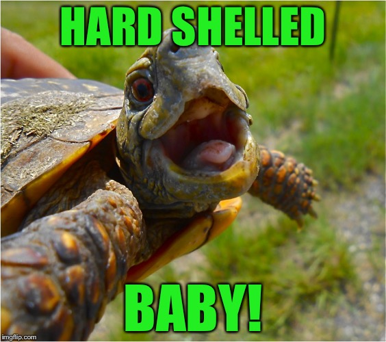 HARD SHELLED BABY! | made w/ Imgflip meme maker