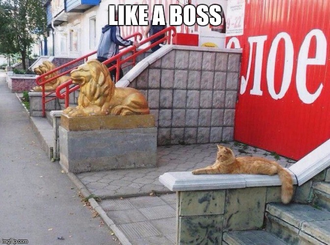LIKE A BOSS | image tagged in cats meow | made w/ Imgflip meme maker