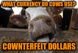 WHAT CURRENCY DO COWS USE? COWNTERFEIT DOLLARS | made w/ Imgflip meme maker
