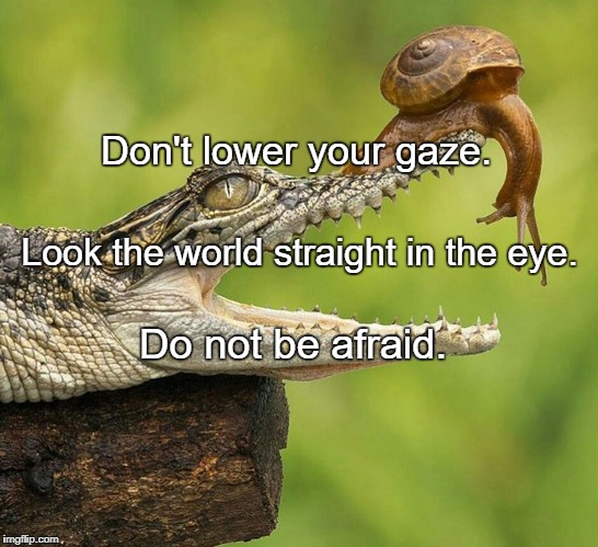 Don't lower your gaze. Do not be afraid. Look the world straight in the eye. | image tagged in brave snail | made w/ Imgflip meme maker