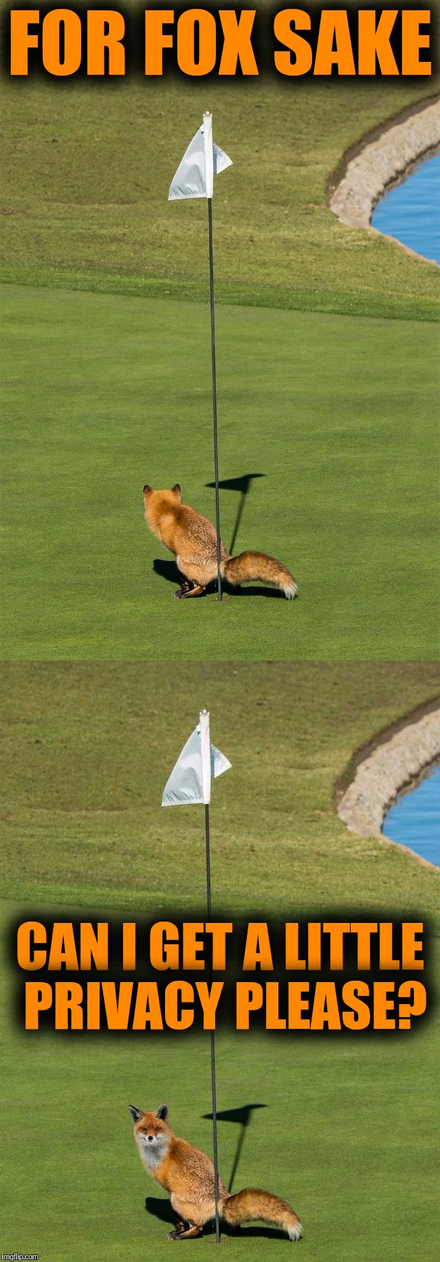 Foxholes | FOR FOX SAKE CAN I GET A LITTLE PRIVACY PLEASE? | image tagged in memes,fox,animals,golf | made w/ Imgflip meme maker