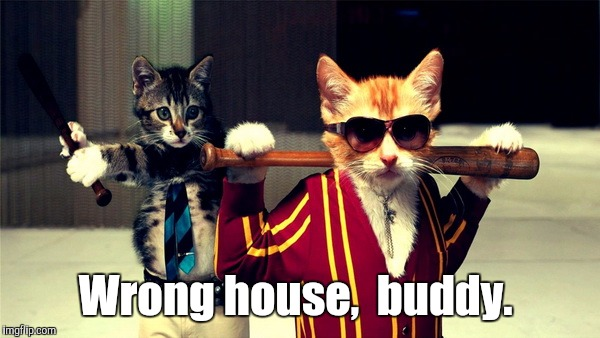 Gangster Cats | Wrong house,  buddy. | image tagged in gangster cats | made w/ Imgflip meme maker