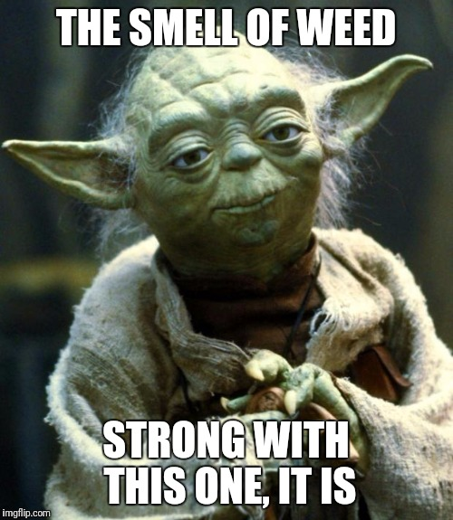 Star Wars Yoda Meme | THE SMELL OF WEED STRONG WITH THIS ONE, IT IS | image tagged in memes,star wars yoda | made w/ Imgflip meme maker