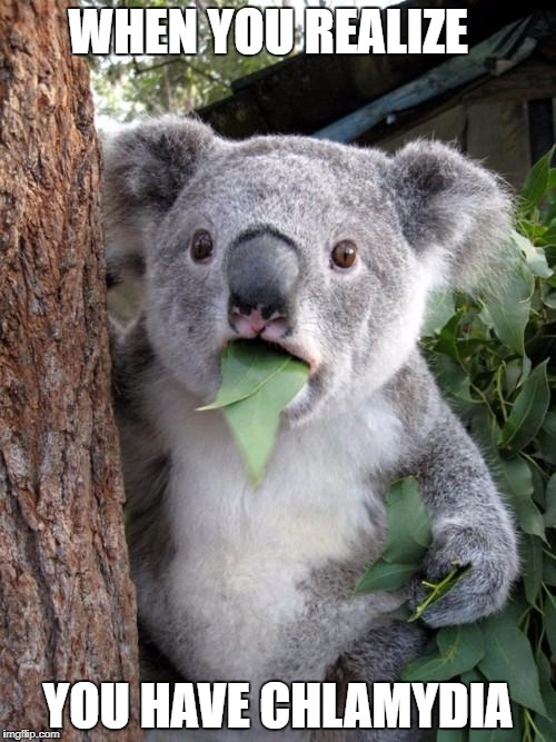 Surprised Koala Meme | WHEN YOU REALIZE YOU HAVE CHLAMYDIA | image tagged in memes,surprised koala | made w/ Imgflip meme maker