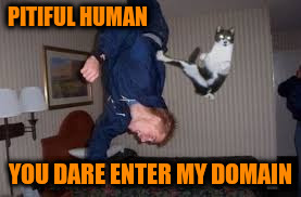 PITIFUL HUMAN YOU DARE ENTER MY DOMAIN | made w/ Imgflip meme maker