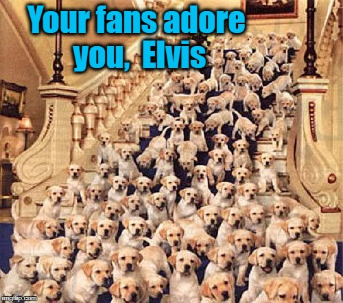 Your fans adore you,  Elvis | made w/ Imgflip meme maker
