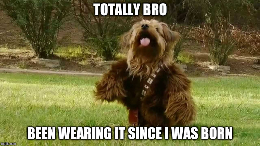 TOTALLY BRO BEEN WEARING IT SINCE I WAS BORN | made w/ Imgflip meme maker