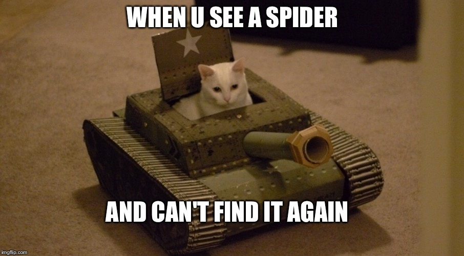 WHEN U SEE A SPIDER AND CAN'T FIND IT AGAIN | image tagged in cat,tank | made w/ Imgflip meme maker