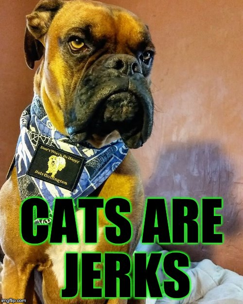 Grumpy Dog | CATS ARE JERKS | image tagged in grumpy dog | made w/ Imgflip meme maker