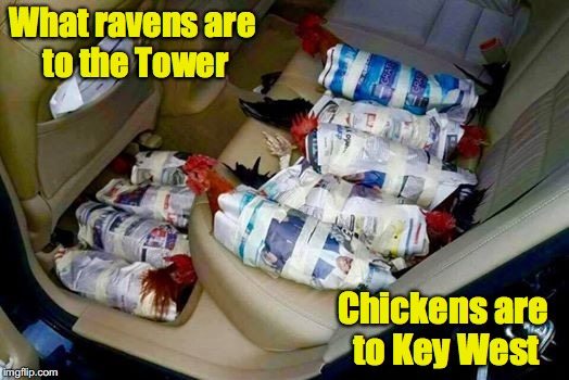 #Savethechickens | What ravens are to the Tower Chickens are to Key West | image tagged in hurricane irma,chickens | made w/ Imgflip meme maker