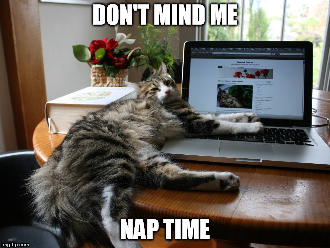 DON'T MIND ME NAP TIME | made w/ Imgflip meme maker
