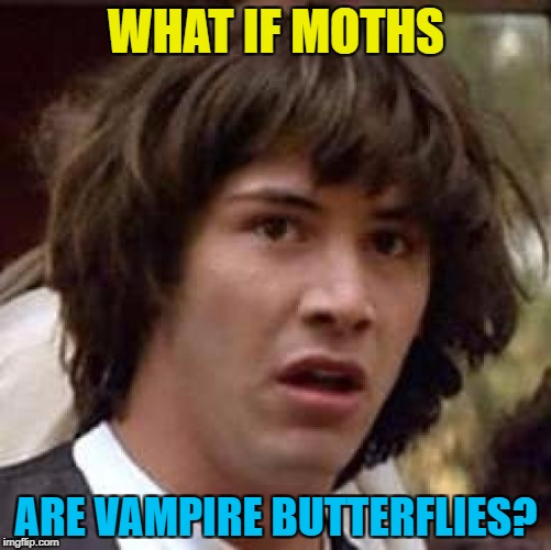 Makes sense... :) | WHAT IF MOTHS ARE VAMPIRE BUTTERFLIES? | image tagged in memes,conspiracy keanu,animals,moths,butterflies | made w/ Imgflip meme maker