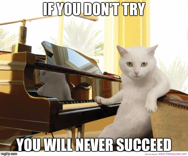 IF YOU DON'T TRY YOU WILL NEVER SUCCEED | image tagged in meme cat | made w/ Imgflip meme maker