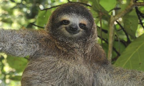 happy sloth blank template imgflip