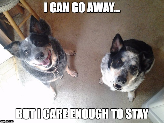 i can go away | I CAN GO AWAY... BUT I CARE ENOUGH TO STAY | image tagged in go away | made w/ Imgflip meme maker