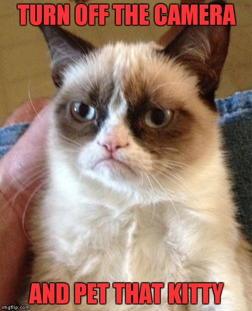 Grumpy Cat Meme | TURN OFF THE CAMERA AND PET THAT KITTY | image tagged in memes,grumpy cat | made w/ Imgflip meme maker